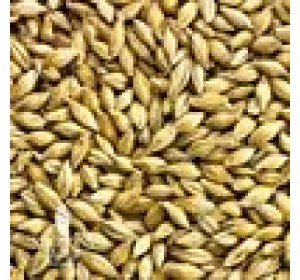SIMPSONS GOLDEN PROMISE MALT 1 LB